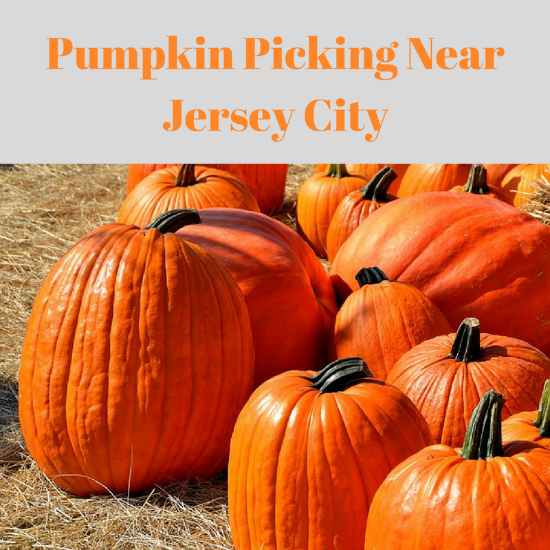 Pumpkin Picking Near Jersey City
