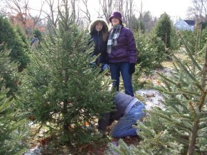 Where to buy Christmas Trees & Wreaths In & Around Jersey City
