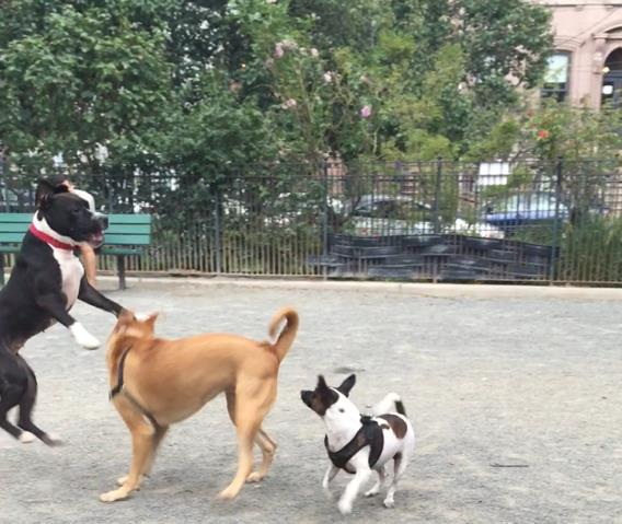 Dog parks and dog-friendly places in and around Jersey City